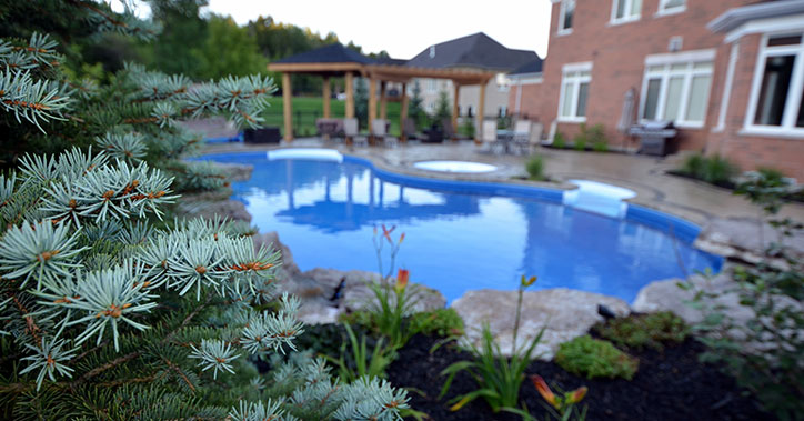 close up of pine tree with outdoor pool in background